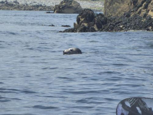 Groupe Rando - Réserve Naturelle des 7 îles (14/06/2015)